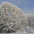 Winter In Oregon by John Shaw