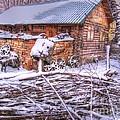 winter Russia by Yury Bashkin