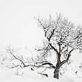 Winter Sage by Sandi Mikuse