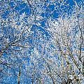 Winter by Sarka Olehlova