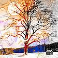 Winter Sun by Edmund Nagele