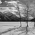 Winter Trees by Inge Riis McDonald