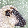 Wishing Ewe A White Christmas by Angela Davies