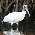Wood Stork In The Swamp by Christiane Schulze Art And Photography