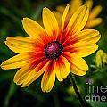 Yellow Daisy by Grace Grogan