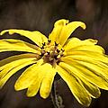 Yellow Flower by Betty Depee