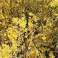 Yellow Spring by Cora Wandel