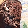 Young Bull At Yellowstone by Jim Ellis