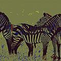 Zebras by Ronald Jansen