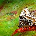 Butterfly by Heike Hultsch