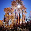 California, Sierra Nevada Mountains by Christopher Talbot Frank