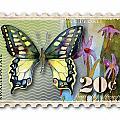 20 Cent Butterfly Stamp by Amy Kirkpatrick
