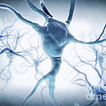 Neurons by Science Picture Co