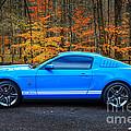 2010 Shelby Gt500 by Paul Mashburn