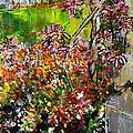 2012 119 Daisies Butterfly Garden United States Botanic Garden Washington Dc by Alyse Radenovic