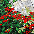 2013 010 Poinsettias And Dots Conservatory At The Us Botanic Garden Washington Dc by Alyse Radenovic