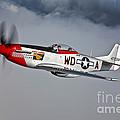 A P-51d Mustang In Flight by Scott Germain