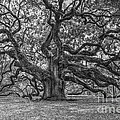 Angel Oak Tree In Black And White by Dale Powell
