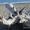 Driftwood On The Beach by Chani Demuijlder