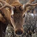 Usa, Wyoming, Yellowstone National Park by Jaynes Gallery