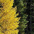 Autumn by Elijah Weber