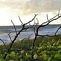 Beach by William Watts