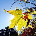 Autumn by Les Cunliffe