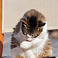 Cat In Hydra Island by George Atsametakis