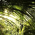 Tropical Forest by Les Cunliffe