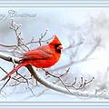 2559-1 Cardinal by Travis Truelove