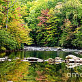 Fall Along Williams River by Thomas R Fletcher