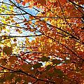 Fall Explosion Of Color by Kenny Glover