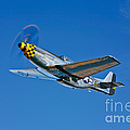 A North American P-51d Mustang by Scott Germain