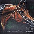 Arabian Horse  by Angel Ciesniarska