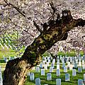 Arlington National Cemetary by Brian Jannsen