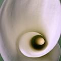 Arum Flower by Perennou Nuridsany