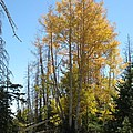 Aspen Trees by Christiane Schulze Art And Photography