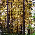 Autumn 5 by J D Owen