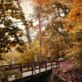 Autumn Awaits by Jessica Jenney