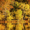 Autumn Color by Brian Jannsen
