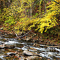 Autumn Elk River by Thomas R Fletcher