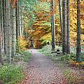 Autumn Forest by Jean Schweitzer