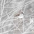 Bird by Amel Dizdarevic