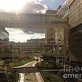 Bridge by Joseph Yarbrough