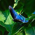 Butterfly by David Hart