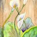 3 Calla Lilies by Diana Cardosi-Bussone