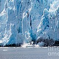 Calving Glacier by Sophie Vigneault