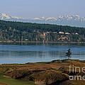Chambers Bay Golf Course - University Place - Washington by Yefim Bam