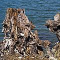 Driftwood  by Allan  Hughes