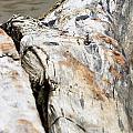 Driftwood by Henrik Lehnerer